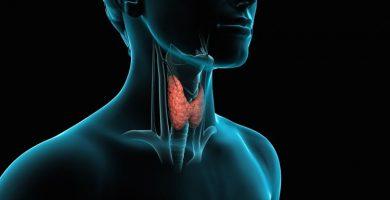 Funciones de la tiroides