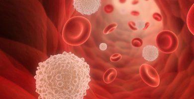 funciones de los glóbulos blancos