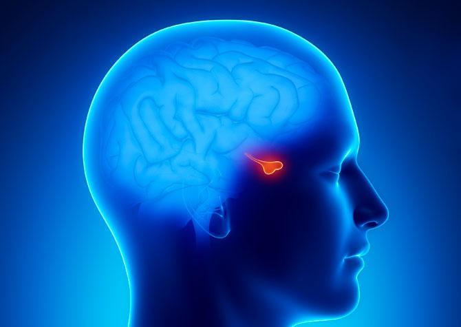 Funciones de la hipófisis